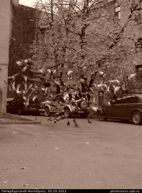 Фотокросс «Осенний», кросс Шабаш команды №37
