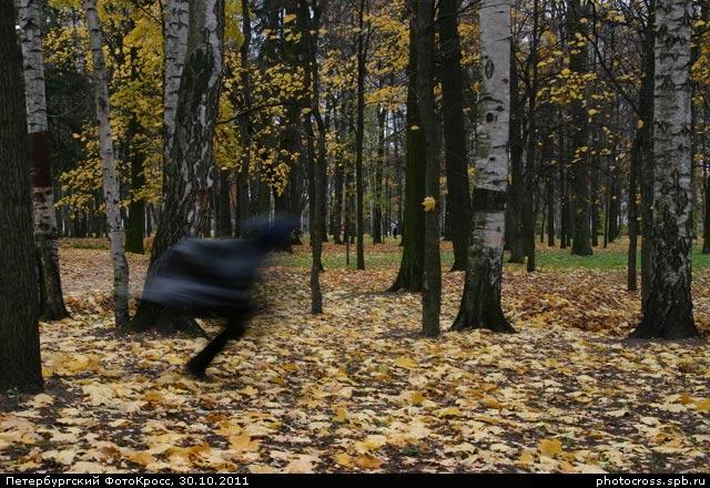 Фотокросс «Осенний», кросс Привиделось... команды №41